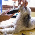 cat grooming Abu Dhabi